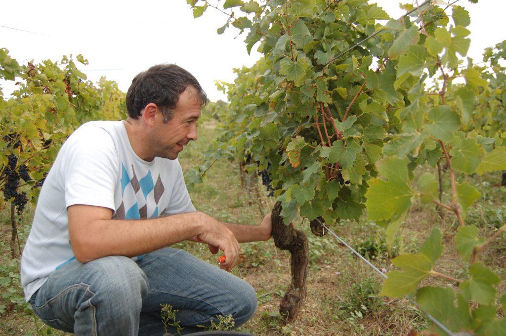 Franck Thomas dans les vignes